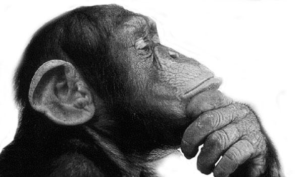 monkey-think